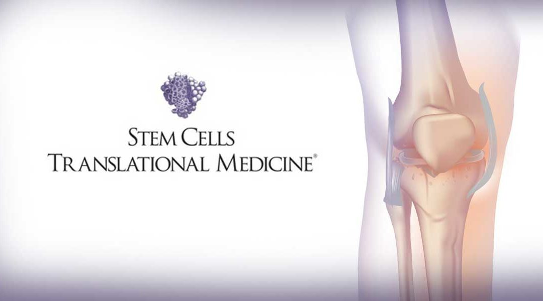 Clinical Trial Shows Promise of Stem Cells in Offering Safe, Effective Relief from Arthritic Knees