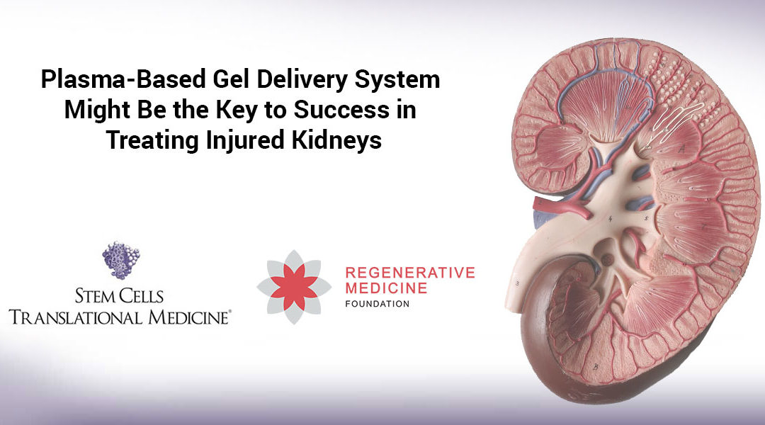 Plasma-Based Gel Delivery System Might Be the Key to Success in Treating Injured Kidneys